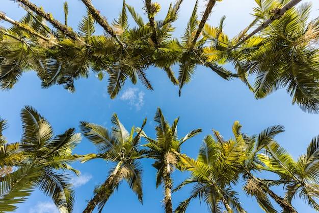 Keizerlijke palmen en blauwe lucht