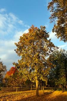 Kenmerken van herfstweer in het bos of in het park, bomen met kleurrijk veelkleurig gebladerte, zonnig weer