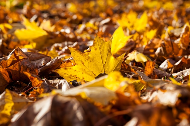 Kenmerken van herfstweer in het bos of in het park