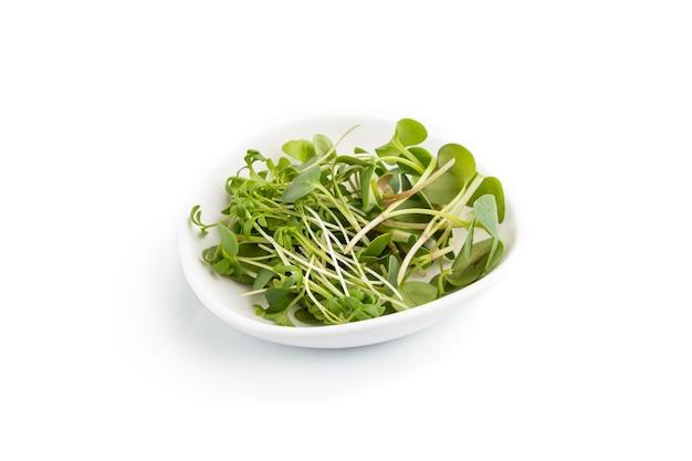 Keramische plaat met microgreen spruiten van radijs en tuinkers geïsoleerd op een wit oppervlak