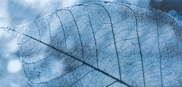 Keramische tegel met transparant bladpatroon