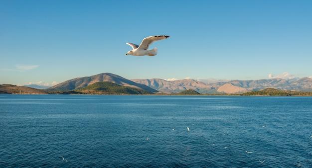 Kerkyra corfu-stad op het eiland corfu in de ionische zee. griekenland. zeemeeuw die boven blauw water, rotsen op achtergrond vliegt. prachtig landschap.
