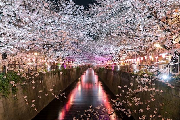 Kersebloesem bekleed meguro-kanaal bij nacht in tokyo, japan.