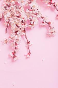Kersenbloemen op roze document achtergrond