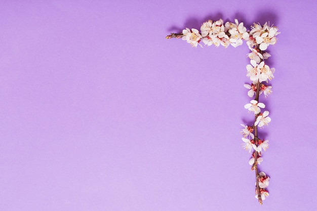 Kersenbloemen op violette document achtergrond