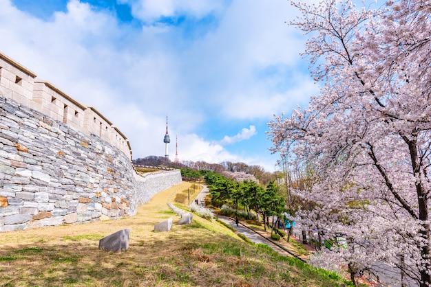 Kersenbloesem bij namsan-park in de stad van seoel, zuid-korea.