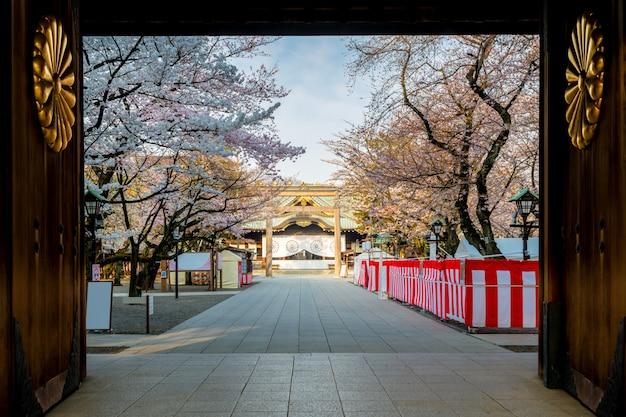 Kersenbloesem bij yasukuni-heiligdom, tokyo, japan. een beroemde toeristische plek in tokio, japan.