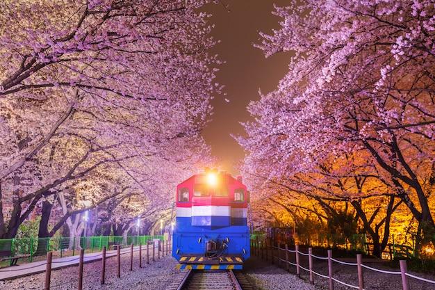 Kersenbloesem in de lente en de trein