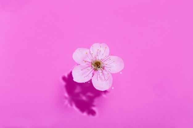 Kersenbloesem op roze water. concept, behang, stofontwerp.