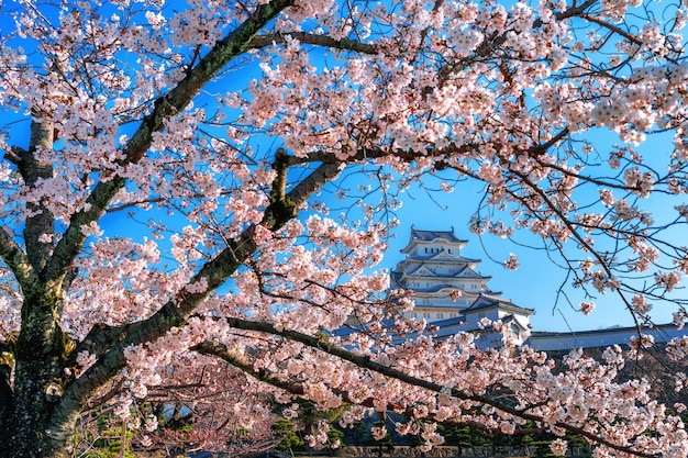 Kersenbloesems en kasteel in himeji, japan.