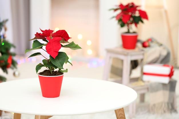 Kerst bloem poinsettia op vakantie interieur