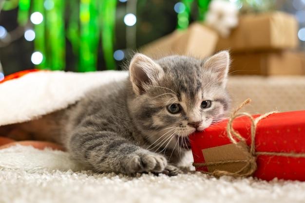 Kerst kat eet geschenkdoos. mooie kleine tabby kitten spelen met nieuwe jaar huidige doos thuis