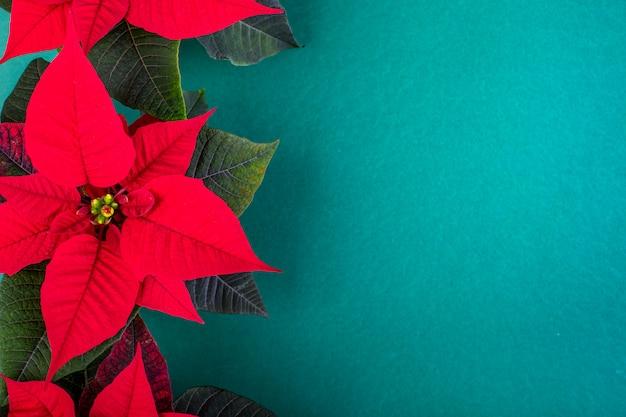Kerst samenstelling. groene kerstversiering, fir takken met rode bloemen op groene achtergrond