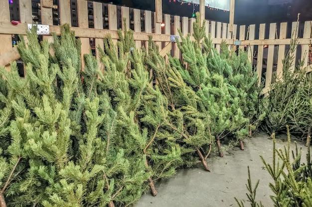 Kerstbomen te koop op een markt