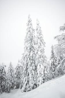 Kerstboom bedekt met sneeuw