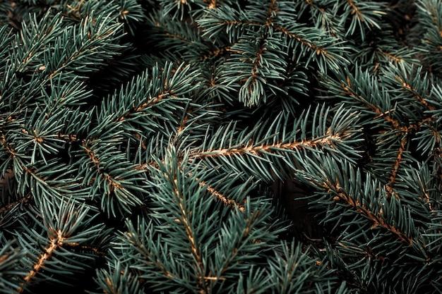 Kerstboom, takken. kerstmis, nieuwjaar. behang. plat lag, bovenaanzicht.