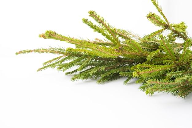 Kerstboomtak geïsoleerd op een witte achtergrond, kerstversiering, close-up