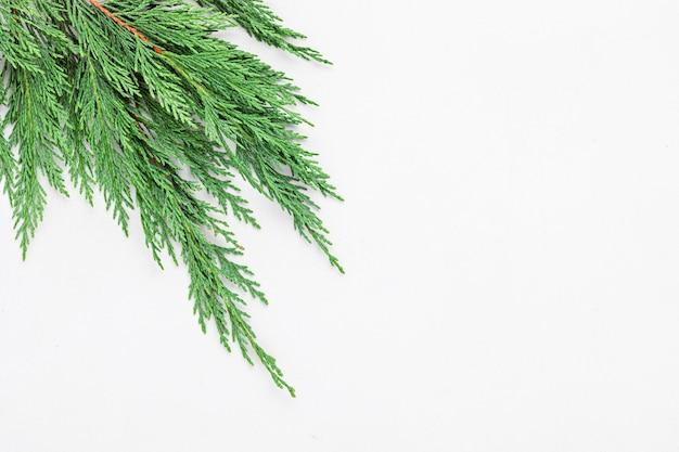 Kerstboomtak, plat lag, bovenaanzicht