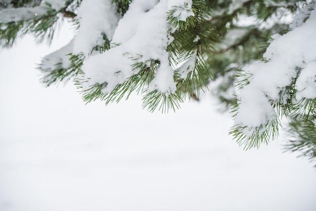 Kerstboomtakken in de sneeuw. winterlandschap met blure besneeuwde bomen en sneeuwvlokken. kerst concept met ruimte voor tekst