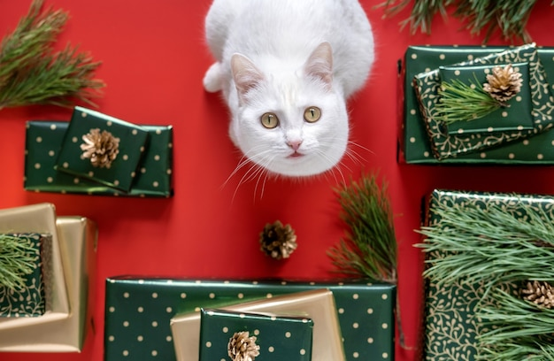 Kerstcadeaus in groen en goud papier en kat