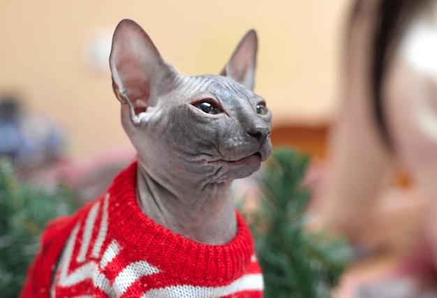 Kerstconcept, sphynx-kat in een rood jasje bij de kerstboom, kopieën van de ruimte. hoge kwaliteit foto