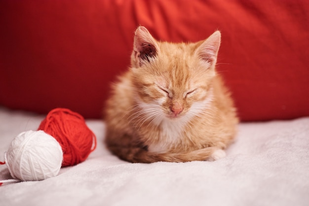 Kerstmisfoto met een leuke gemberkat op de rode achtergrond