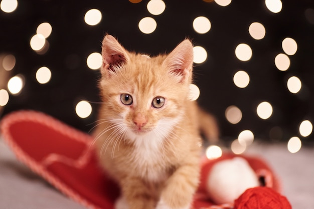 Kerstmisfoto met een leuke gemberkat van kleurrijke lichten op de achtergrond