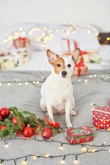 Kerstmishond jack russell op het bed in het decor van het nieuwjaar