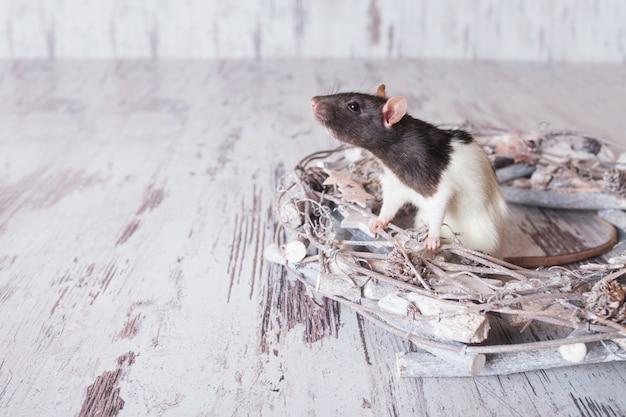 Kerstrat symbool van het nieuwe jaar 2020. jaar van de rat.