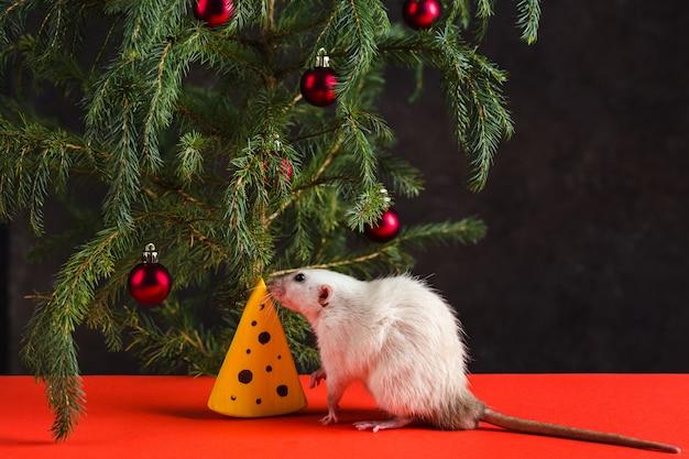 Kerstsamenstelling met een echte rat. een rat in de buurt van een kerstboom met speelgoed en kunstmatige kaas.