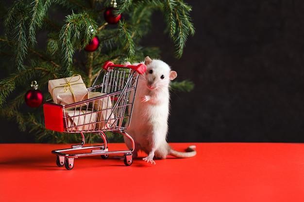 Kerstsamenstelling met een echte rat. een rat in de buurt van een kerstboom met speelgoed houdt een karretje met geschenken na het winkelen