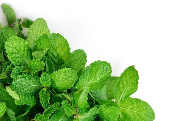 Keuken munt of moeras munt groene bladeren geïsoleerd op een witte achtergrond. bovenaanzicht, plat leggen.