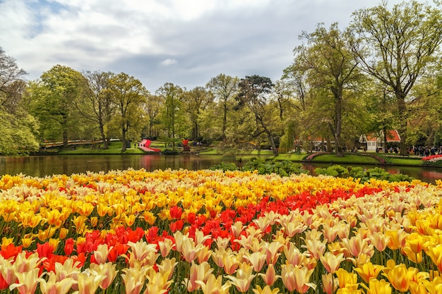 Keukenhof gardens met mooie lentebloemen keukenhofin nederland
