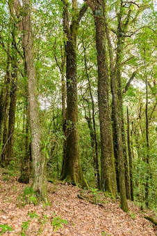 Kew mae pan nature trail wandelpad door de jungle