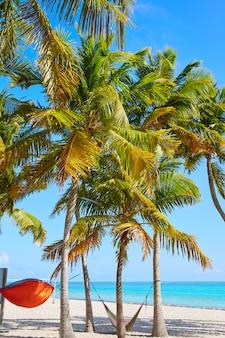 Key west florida smathers strandpalmen vs.