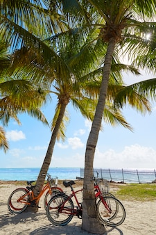 Key west florida strand clearence s higgs