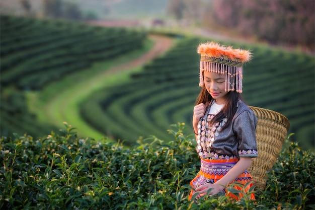 Kid en groene thee veld in shui fong