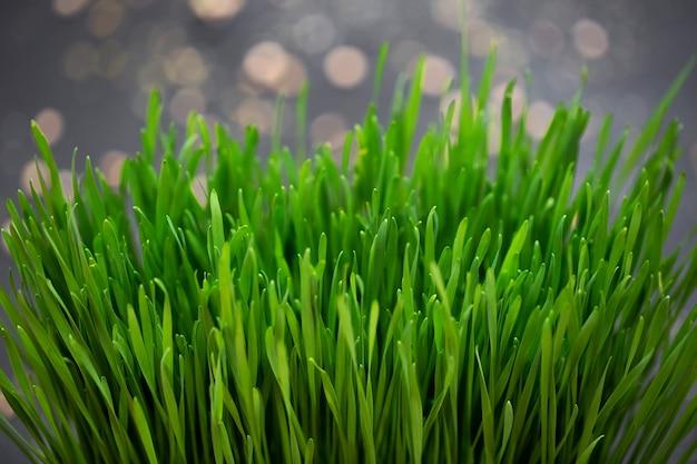 Kiemgroenten tarwe, micro, microgeen