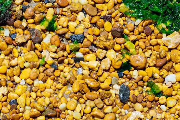 Kiezels en zeewier op strand kust