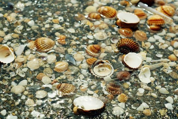 Kiezels, schaaldieren en slakken bedekt met water