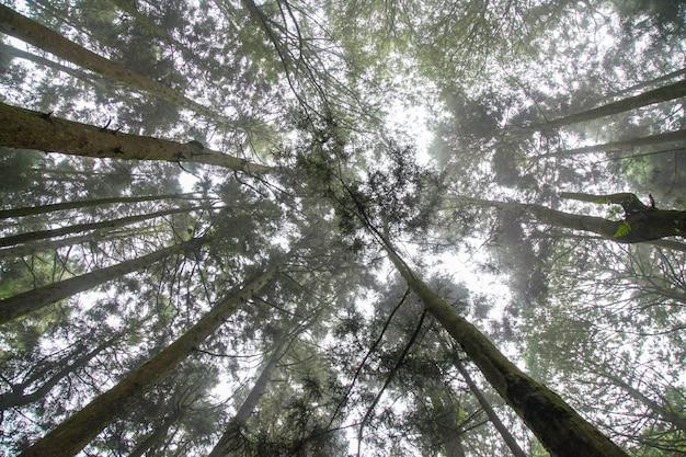 Kijk omhoog luchtboom bij alishan nationaal parkgebied in taiwan.