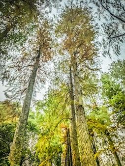 Kijkend naar de prachtige herfstkleuren. mooi bos. herfstbomen bureaubladachtergronden