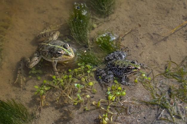 Kikkers in hun natuurlijke omgeving