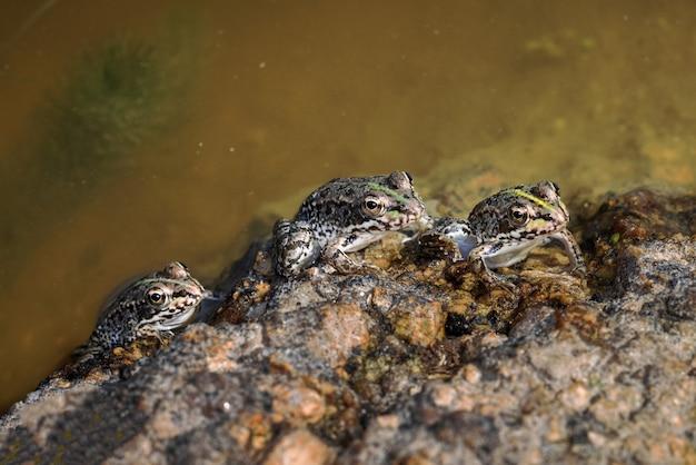 Kikkers of padden in hun natuurlijke omgeving.