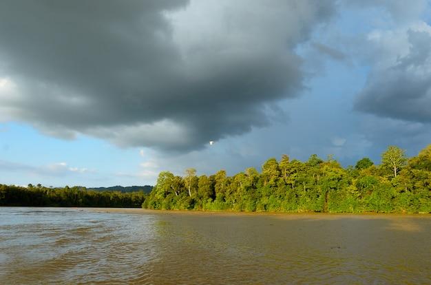 Kinabatangan rivier, maleisië, regenwoud van het eiland borneo