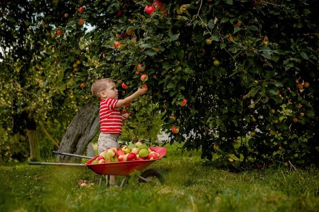 Kind appels plukken op een boerderij