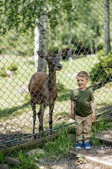 Kind dichtbij wilde herten in dierentuin. kleine jongen op zoek naar de kleine herten in het park.