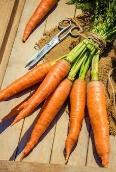 Kind- en biogroenten op de boerderij. selectieve aandacht.