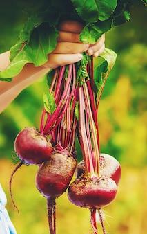 Kind en groenten op de boerderij. foto.