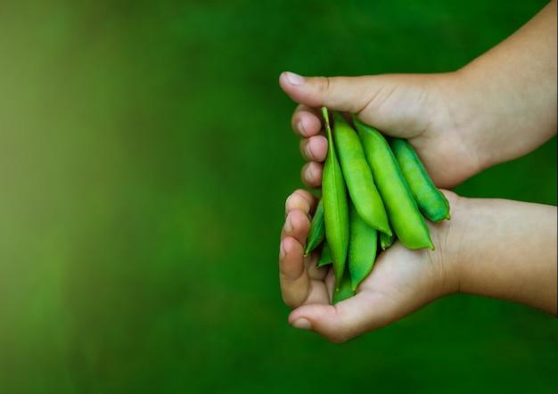 Kind hand met verse groene erwten.